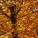 Autumn or Winter Colours