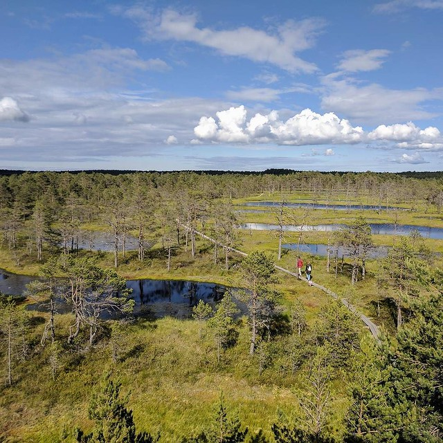 The_bog_from_a_watchtower.