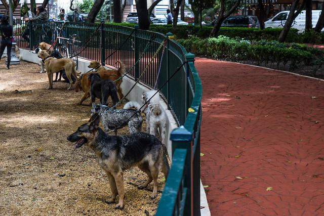 Dogs In Condesa