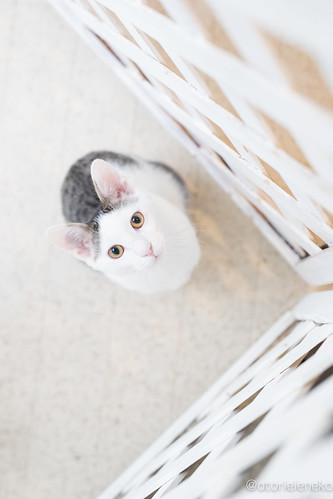 アトリエイエネコ Cat Photographer 39390496412_e0b0a4c5bd NPO法人 東京キャットガーディアン