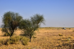 Thar Desert, Rajasthan. India