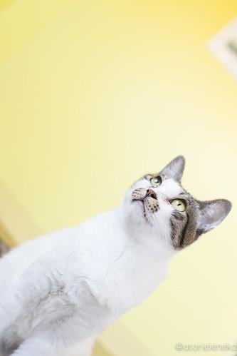 アトリエイエネコ Cat Photographer 24554624117_5565baa950 花の木シェルター