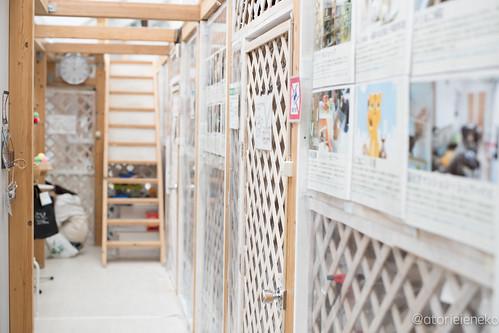 アトリエイエネコ Cat Photographer 39420443821_1b8432d4e9 NPO法人 東京キャットガーディアン