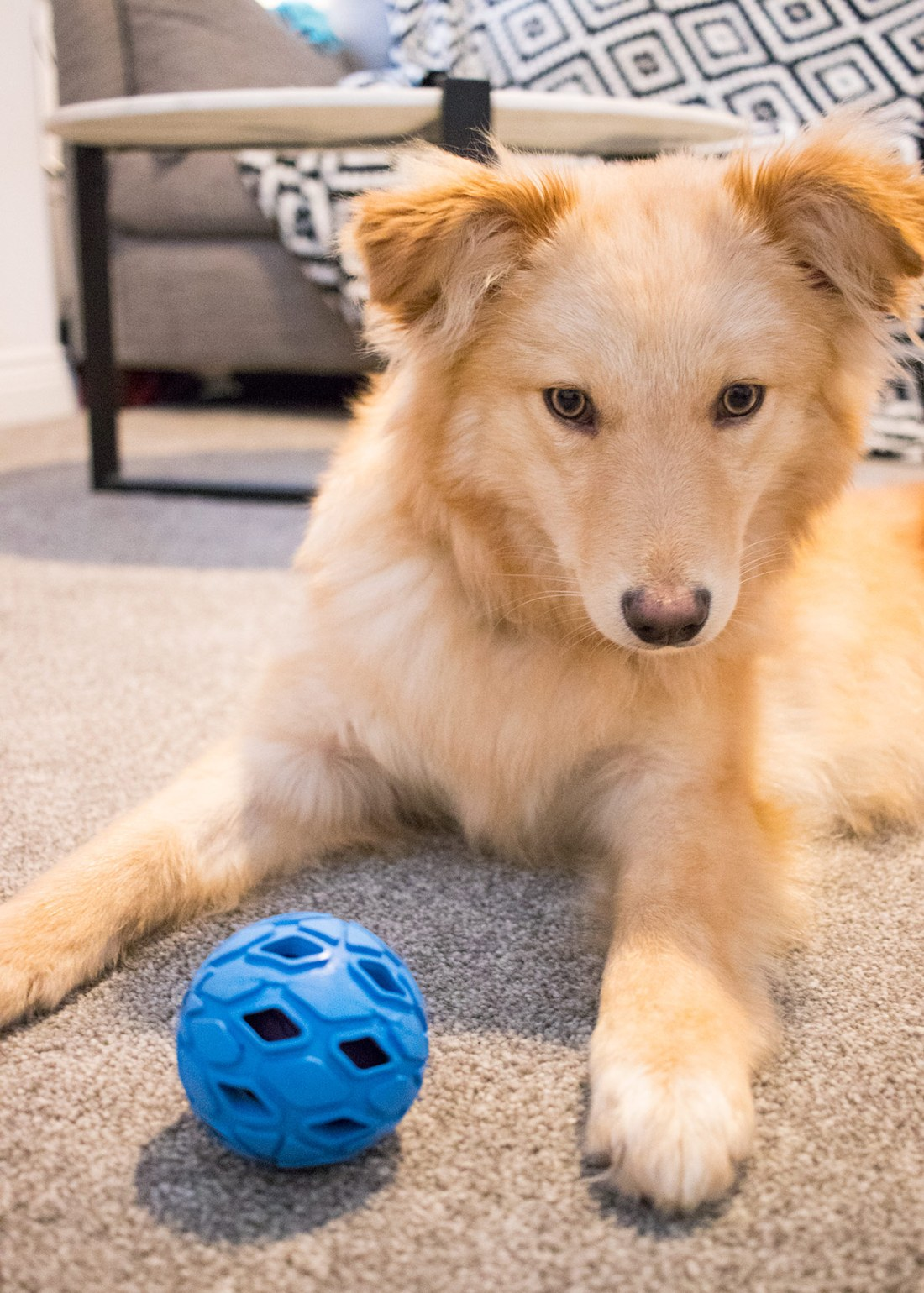 Nellie-with-her-ball