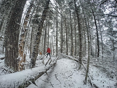 Hobson's Lake Trail - Kearney lake Trail System