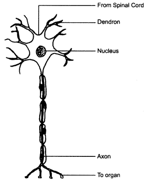 ncert-solutions-for-class-8-science-cell-structure-and-functions-4