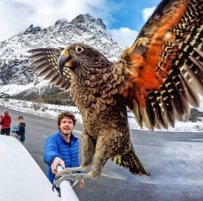 25 incredible photos of pure luck - https://kaftipiperia.com