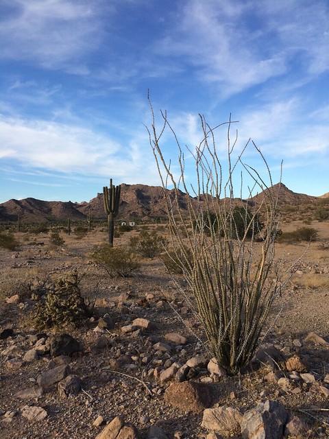 BGAFR -  gate 9 Ocatillo and Saguaro looking at camp