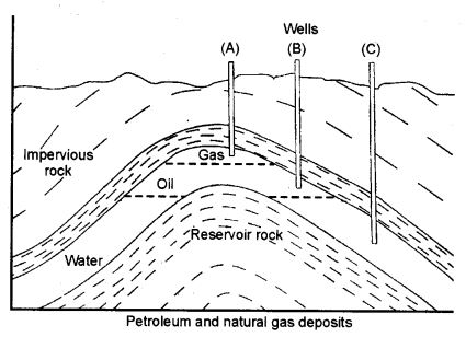 ncert-solutions-for-class-8-materials-coal-and-petroleum-1