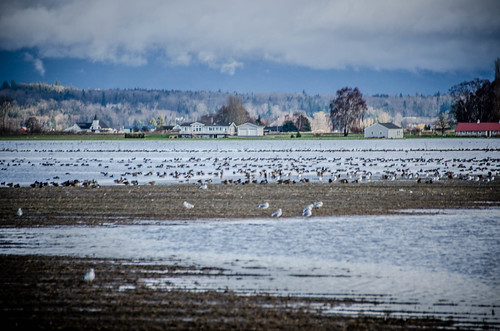 Skagit Fields-003