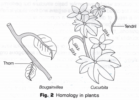 cbse-class-10-science-lab-manual-homology-analogy-plants-animals-2