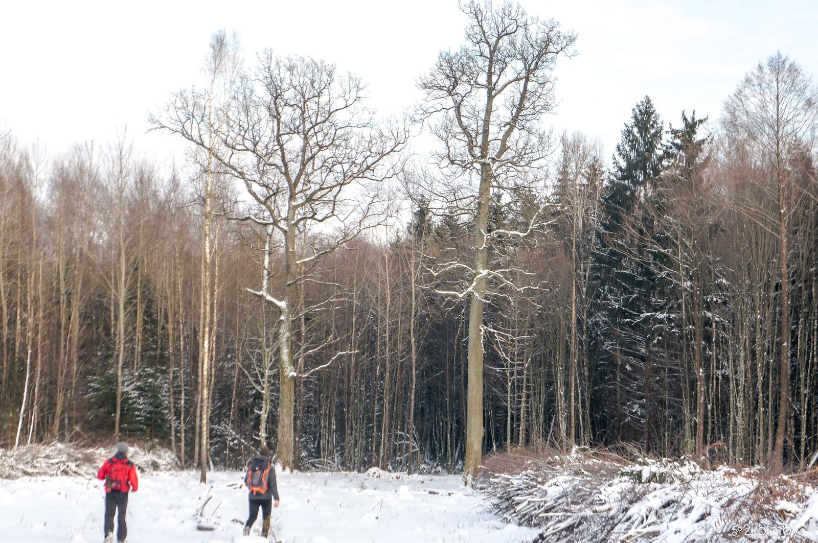 Зимняя походушка Яцуки - Новогрудок 2018