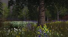 Spring on Binemust