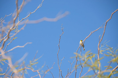 Borrego Springs - cool bird