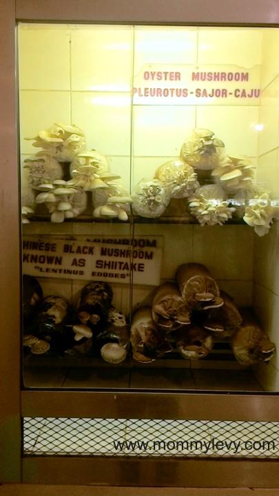 Mushroom Burger8_zpsivboaepc