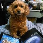Lovely TiAmo Picture  My original santa book and my pet dog TiAmo  僕のイラスト画集「サンタの絵本」と愛犬テイアモの写真をアップしました。  YouTubeヨリ Foy Vance - Purple Rain (Buzzsession) https://youtu.be/Lw3aQtfvUx0  Imagine Dragons - Thunder https://youtu.be/fKopy74weus  Alex Boye' - Beli.