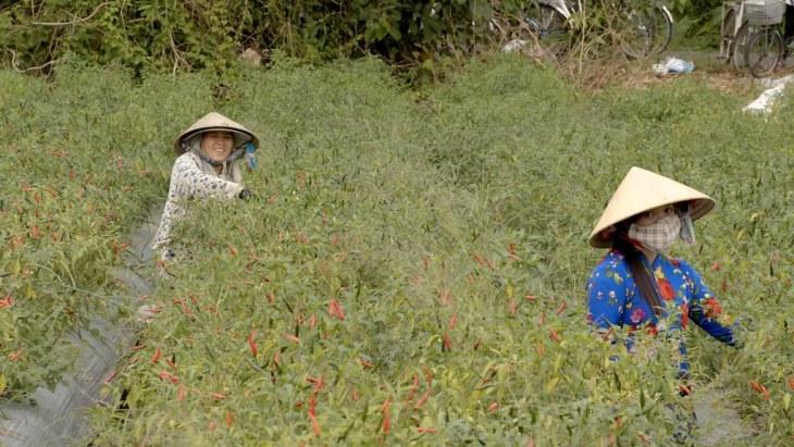 Vietnam Mekong delta agriculture