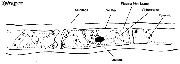 ncert-solutions-for-class-8-science-microorganisms-friend-and-foe-1