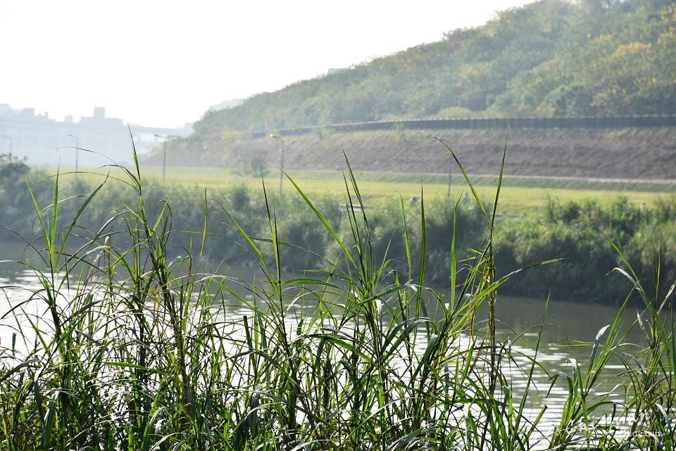 基隆河畔自行車道08.JPG
