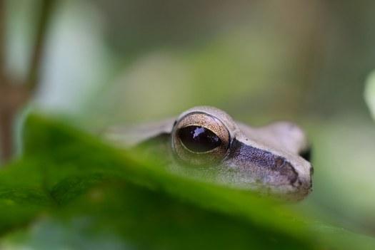 A peek from reptilian eye