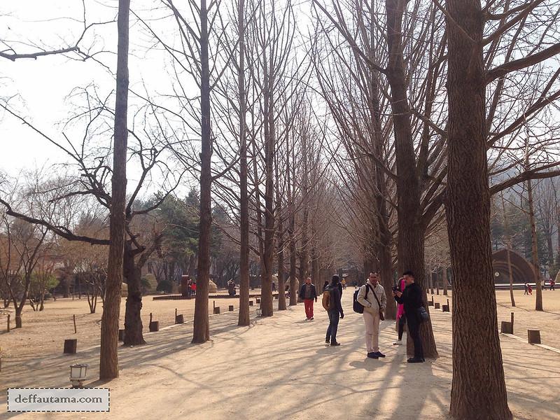 Nami Island - Gingkgo Tree Lane
