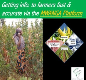 The MWANGA Platform: A tool for rapid transformation of smallholder agriculture.