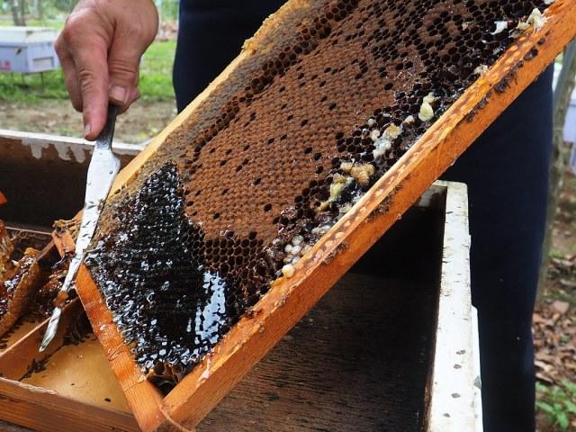 古坑三美養蜂 (16)