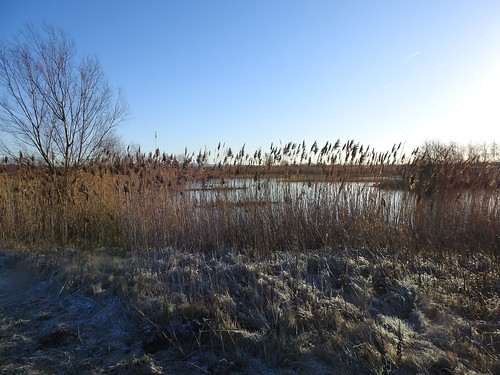 WWT Martin Mere Nature Reserve near Bourscough, Lancashire, UK - January 2018