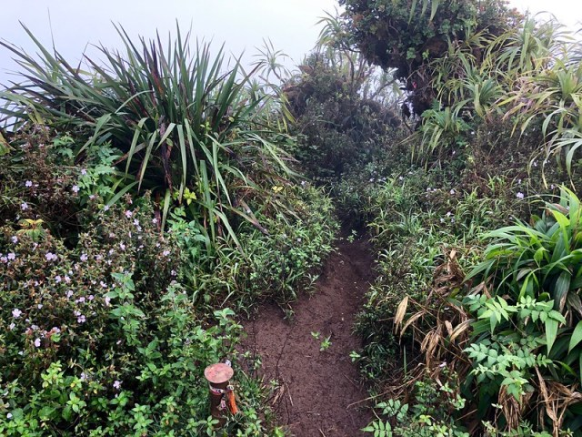 Picture from the Moanalua Middle Ridge Trail