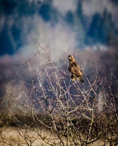 Skagit Bird Watching-18