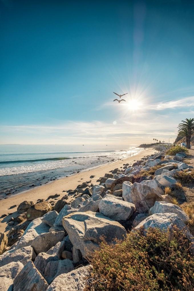 Birds Over Malibu