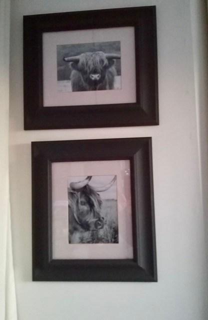 Fotolijsten afbeelding koe