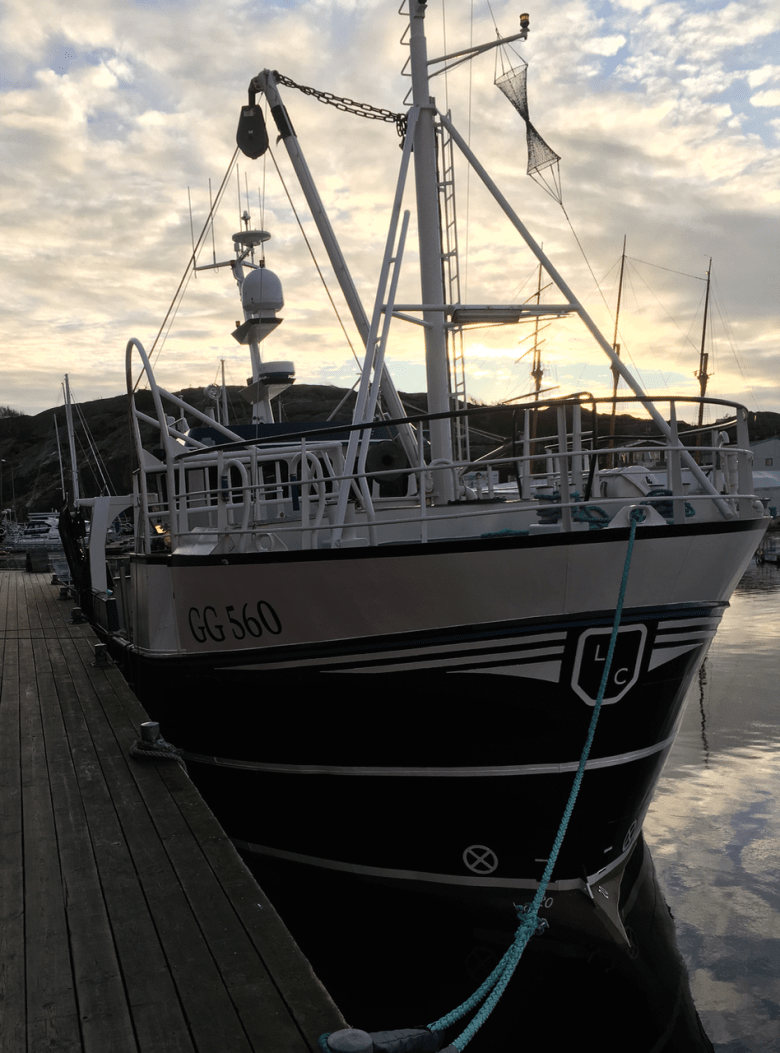 GG_560_osprey_jan_2017 - 6