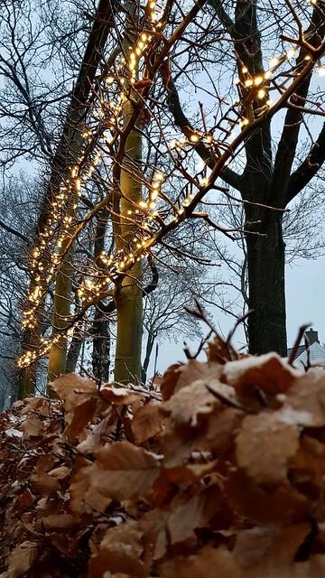 Lampjes in de boom buiten