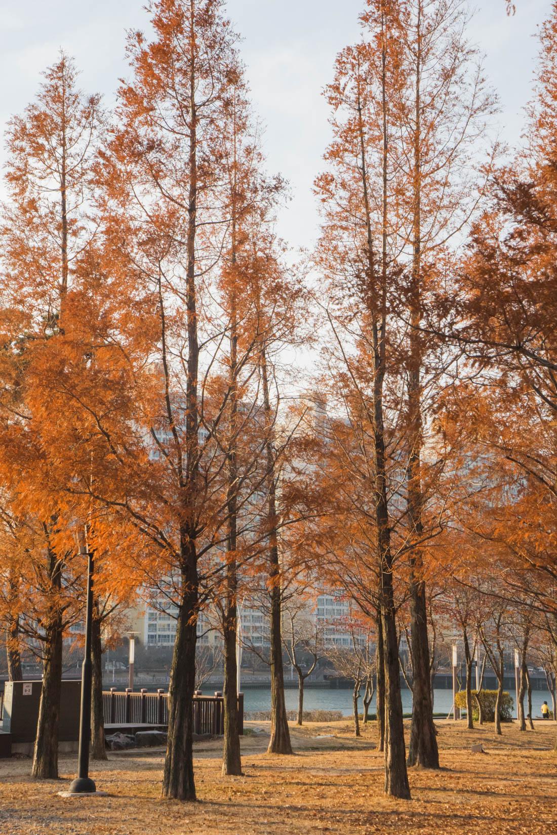 Shinsegae Centum City autumn in busan korea