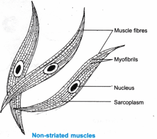ncert-class-9-science-lab-manual-plant-and-animal-tissues-7
