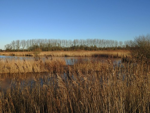 WWT Martin Mere Nature Reserve near Bourscough, Lancashire, UK - January 2018