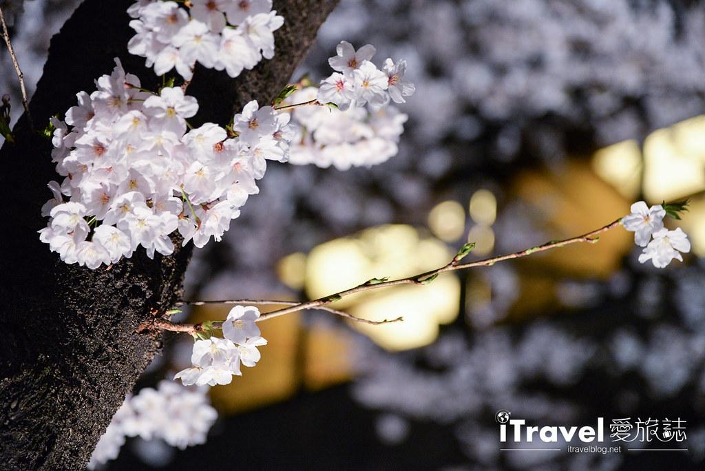 京都赏樱景点 祇园白川 (8)