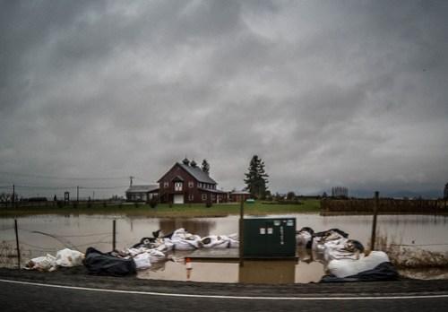 Skagit Farmland Flooding-1