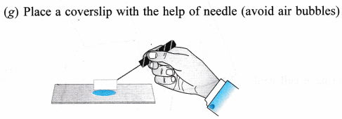 ncert-class-9-science-lab-manual-slide-of-onion-peel-and-cheek-cells-8