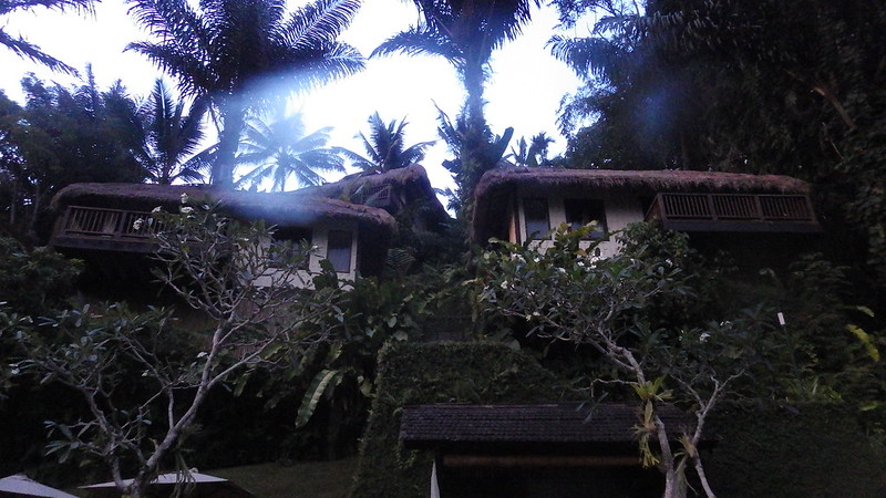 Nandini Jungle Spa Resort Review
