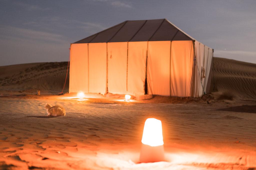 Camp guard cat in the Sahara