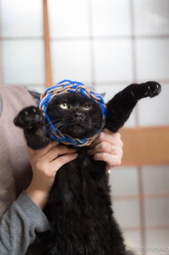 アトリエイエネコ Cat Photographer 25348821617_837c485efe 1日1猫!おおさかねこ俱楽部 里親様募集中のルークくん🎶 1日1猫!  黒猫 里親様募集中 猫写真 猫 子猫 大阪 保護猫 カメラ おおさかねこ倶楽部 Kitten Cute cat