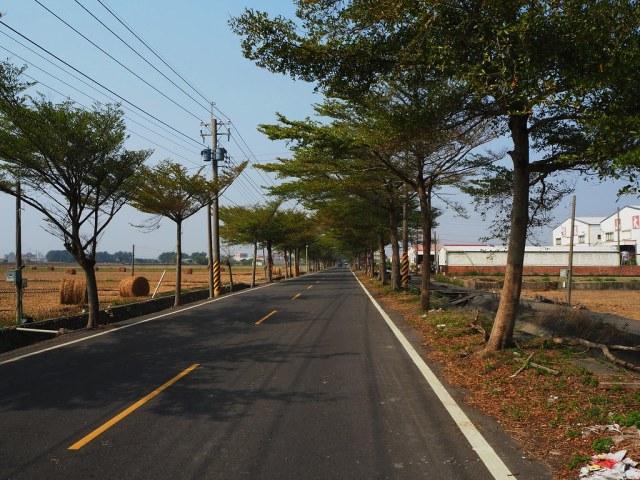 稻草 (1)