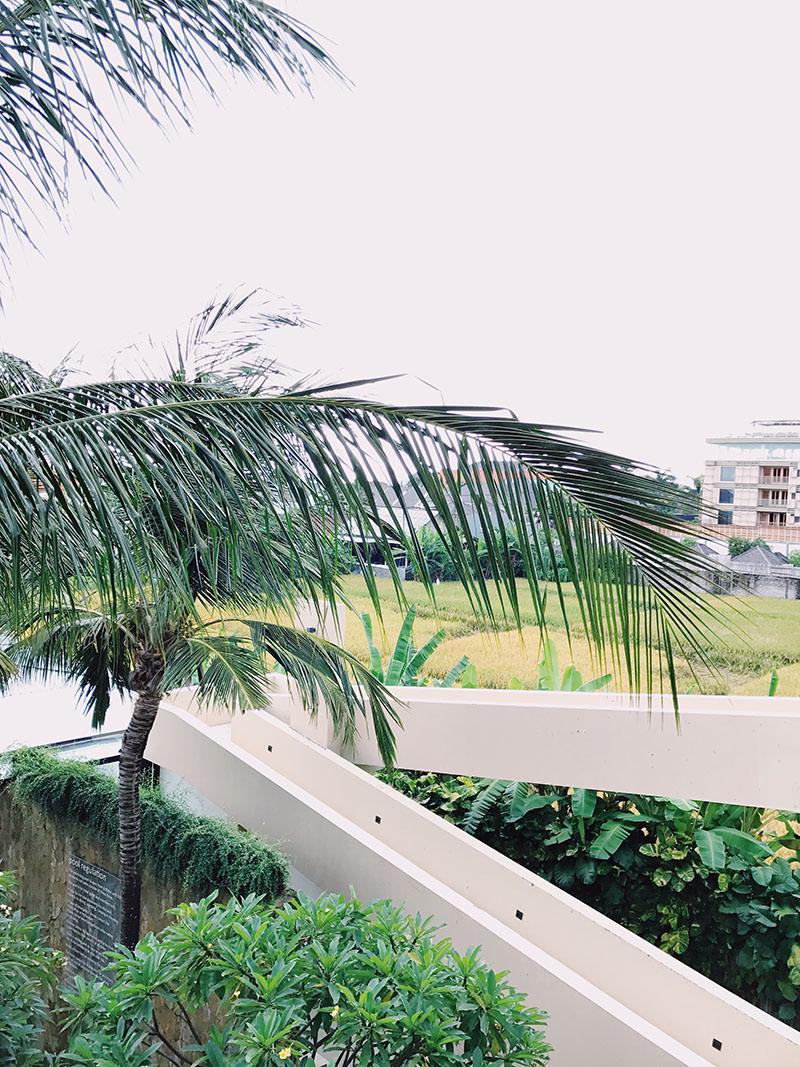 Taum View