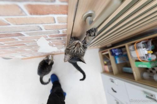 アトリエイエネコ Cat Photographer 26485407758_c754a9b0dc 猫カフェきぶん屋
