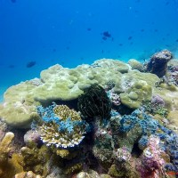 Scuba Diving in Twin Rock and Cathedral, Anilao: An Adventure-Filled Affair with an Alien World