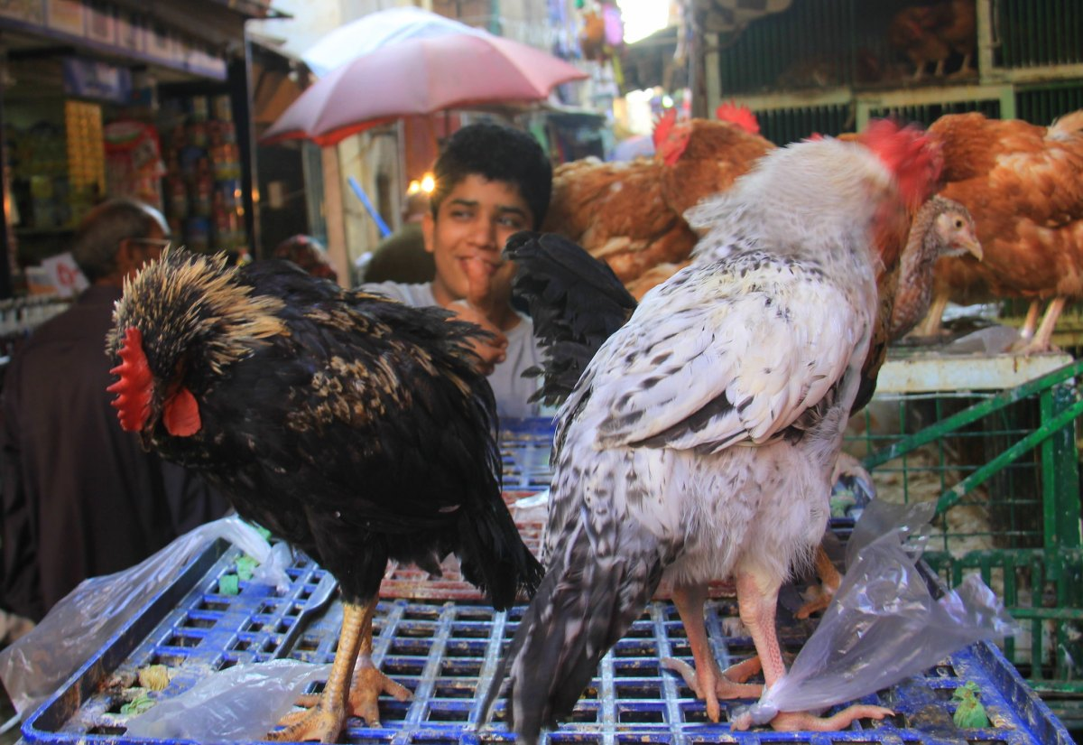 Poultry shop at local market in Cairo