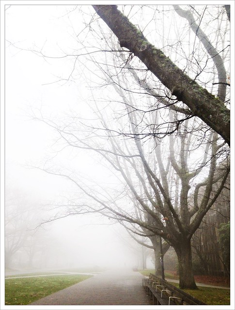 Foggy Days