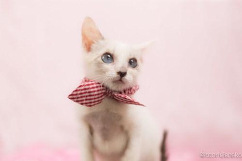 アトリエイエネコ Cat Photographer 39419699291_50b45d3c09 1日1猫!高槻ねこのおうち_カフェぽぉ譲渡会_1 1日1猫!  高槻ねこのおうち 里親様募集中 譲渡会 猫写真 猫 子猫 大阪 写真展 写真 保護猫 カメラ Kitten Cute cat